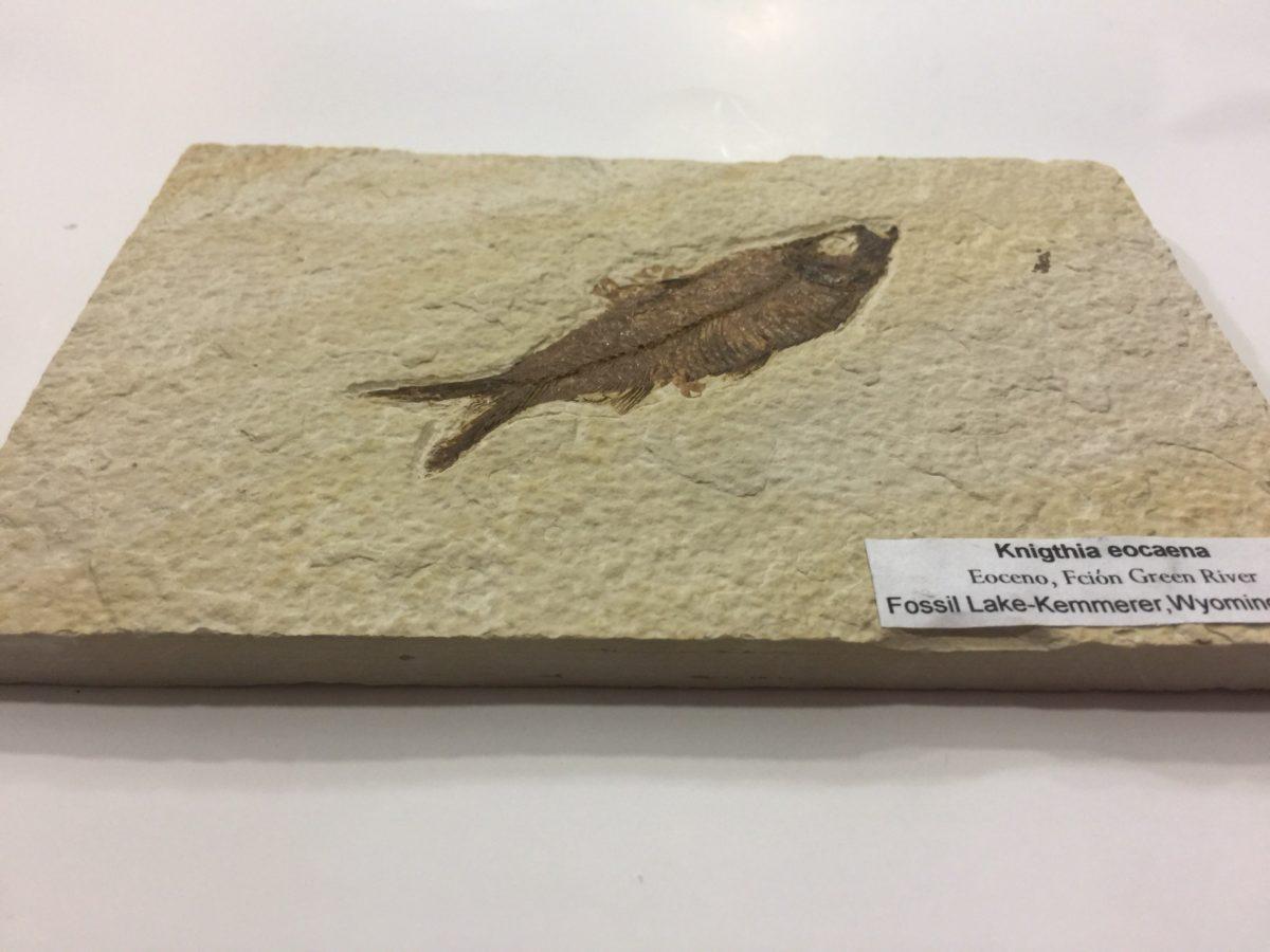 Pez fosil